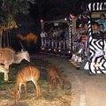 night safari, chiang mai, thailand