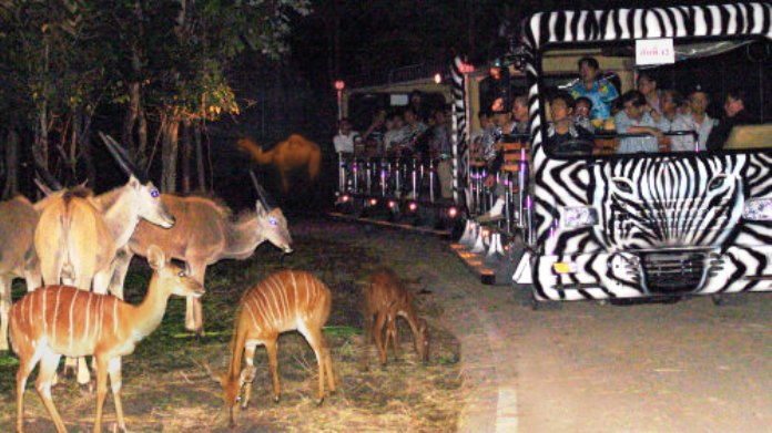 night safari, chiang mai, thailand