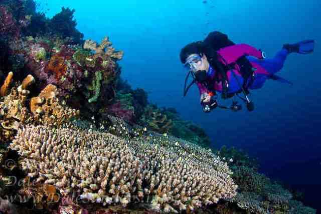 Sites When Scuba Diving In Papua New Guinea