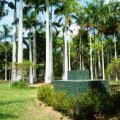 botanical gardens, papua new guinea