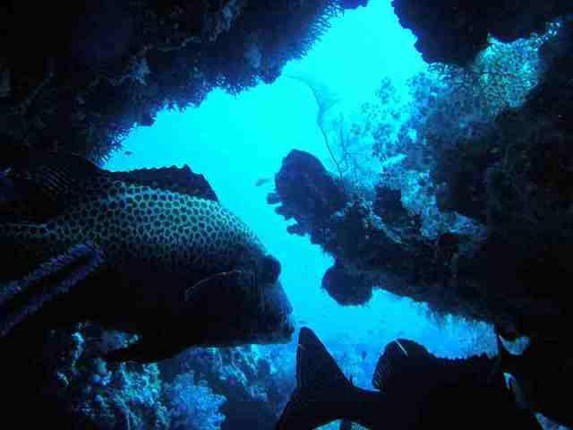 cocoa corner, maldives, marine life