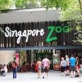 singapoer, zoo, rainforest zoo