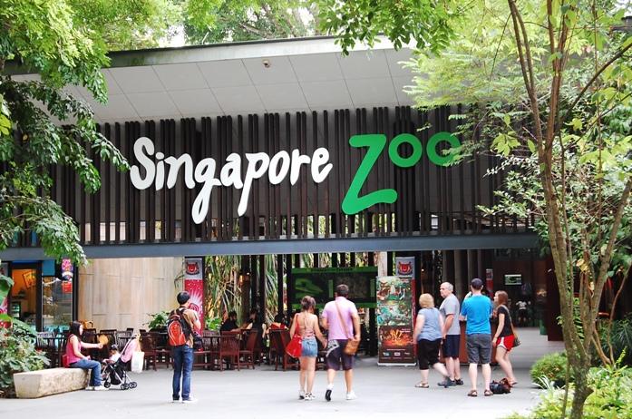 singapoer, zoo, rainforest zoo