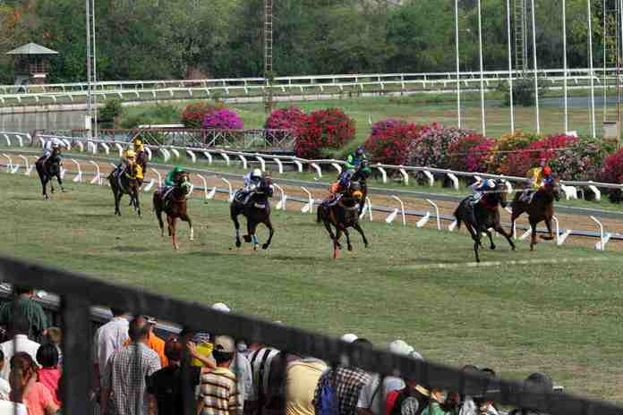 horse racing, thailand, bangkok,
