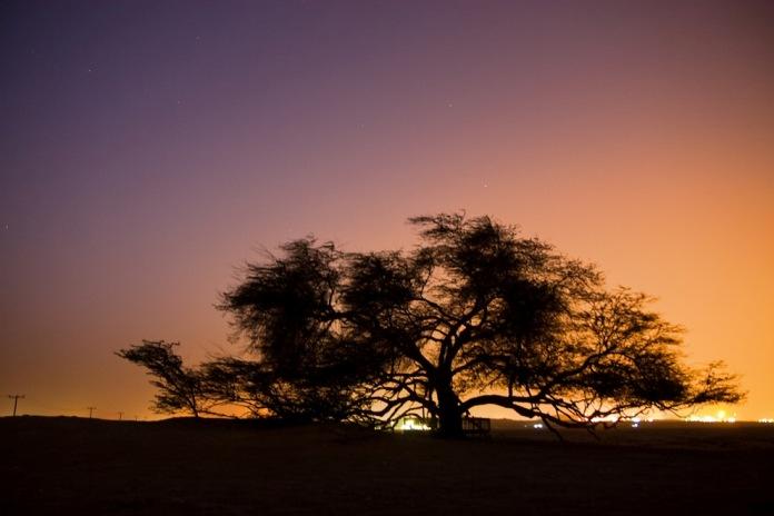 tree of life, bahrain, bahrain attractions