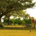 wildlife sanctuary, palawan, calauit, philippines