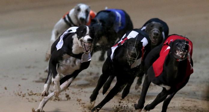 greyhound racing macau, macau gambling