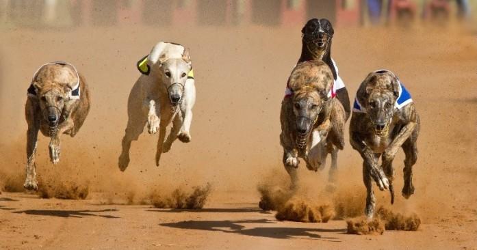 canidrome, macau, greyhound racing