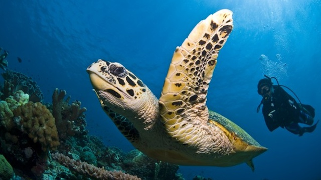 palawan, philippines, tubbataha reef