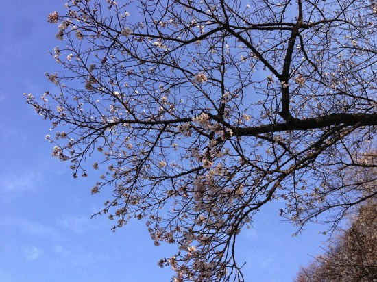 Yoshinoyama 06