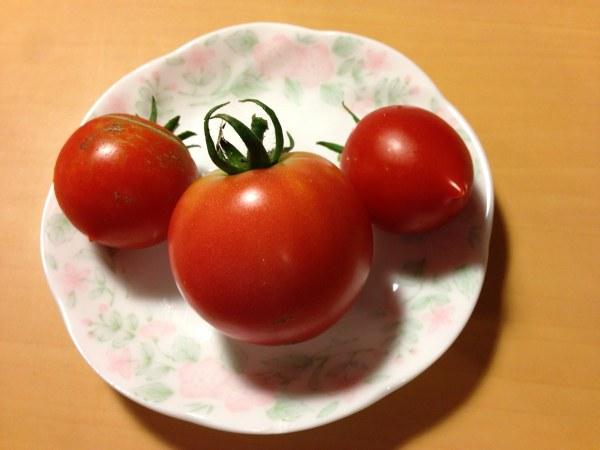 Tomato syuukaku