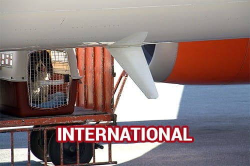 Domestic/National Dog Transport