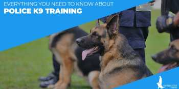 Everything You Need To Know About Police K9 Training