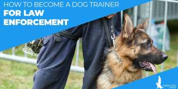 How To Become A Dog Trainer For Law Enforcement