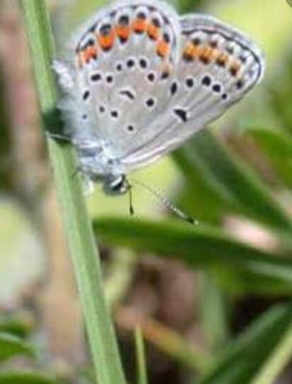 butterfly attracting plant