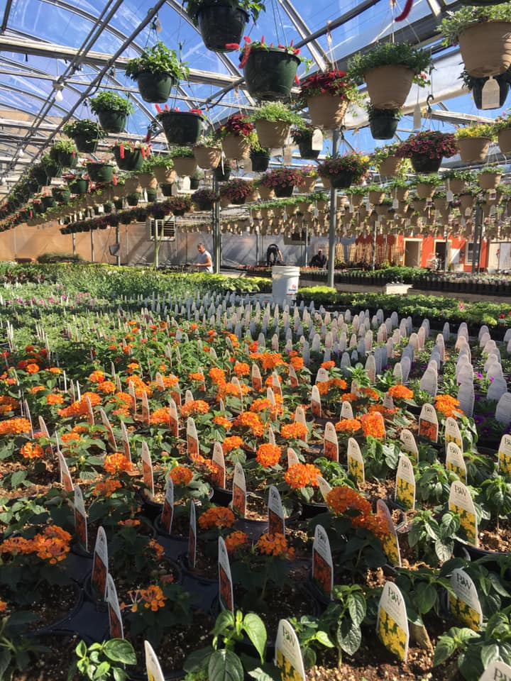 Greenhouse and garden center with outdoor plants and flowers