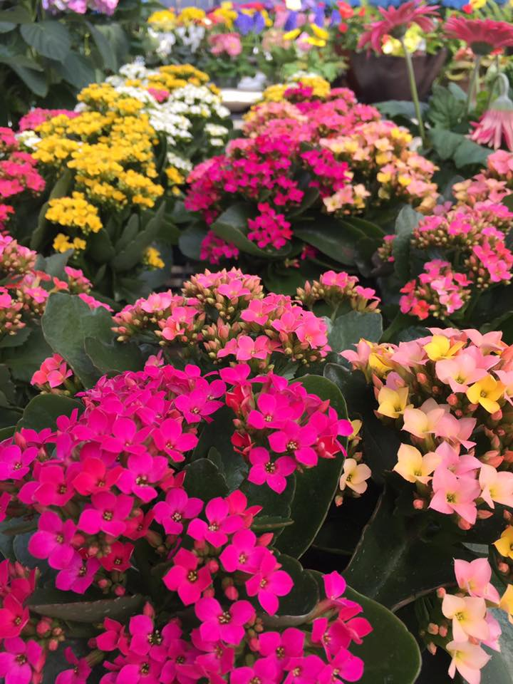 Colorful Easter Plants