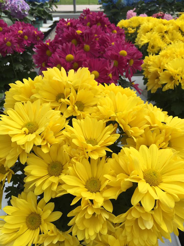 Yellow and Pink Easter Flowers