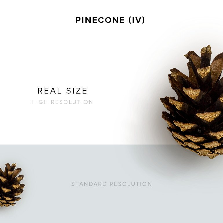 item-description-pinecone-10