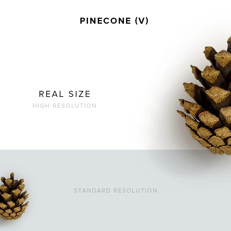 item-description-pinecone-10