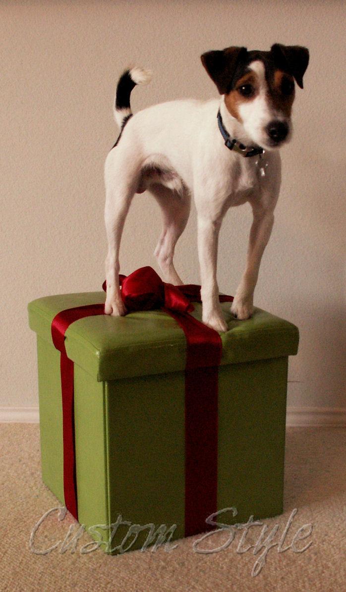Jack Russell Terrier Custom Style