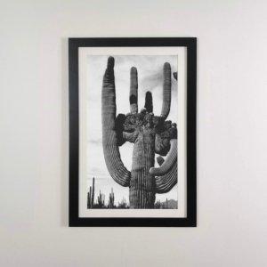 Lámina cactus en marco 37x58 cm negro