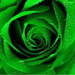 Green-Wedding-Garters-Bridal-Garters-Prom-Garters-Custom-Wedding-Garter-Linda-Joyce-Couture
