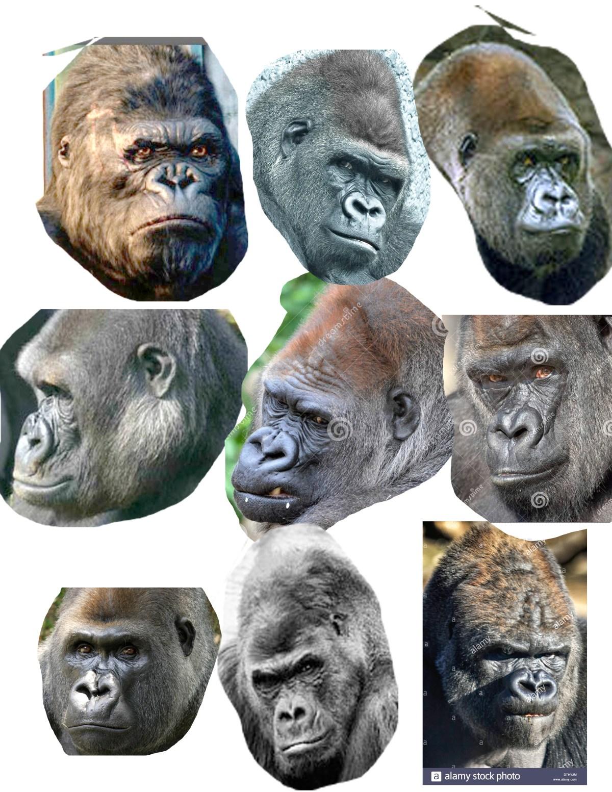 gorilla faces