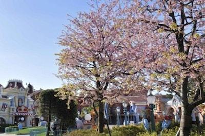 sakura04 min - お花見も楽しめる春の東京ディズニーリゾート〜桜は咲いてる?