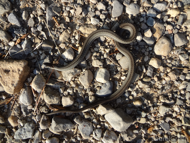 a photograph of a black baby snake