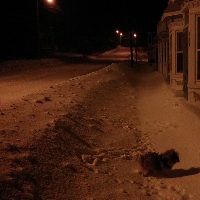 a photo of tibet the dog at night in the snow