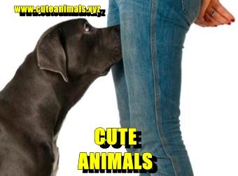 Porque os cachorros cheiram as partes intimas das pessoas