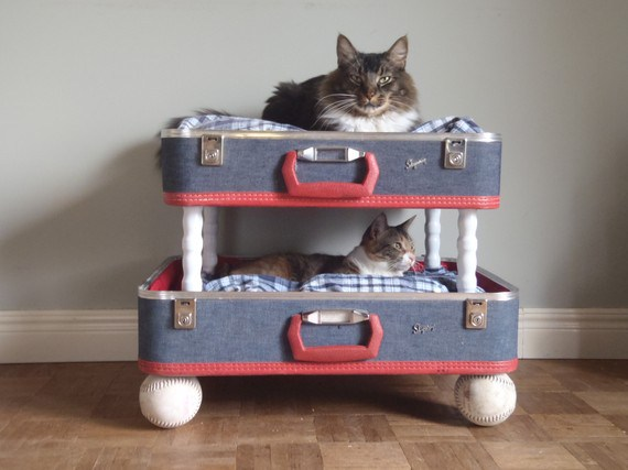 What to buy for your cat: cool suitcase