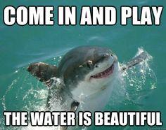 silly-shark