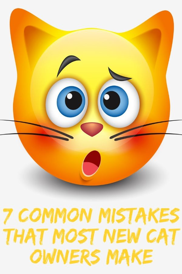 mistakes new cat owners make