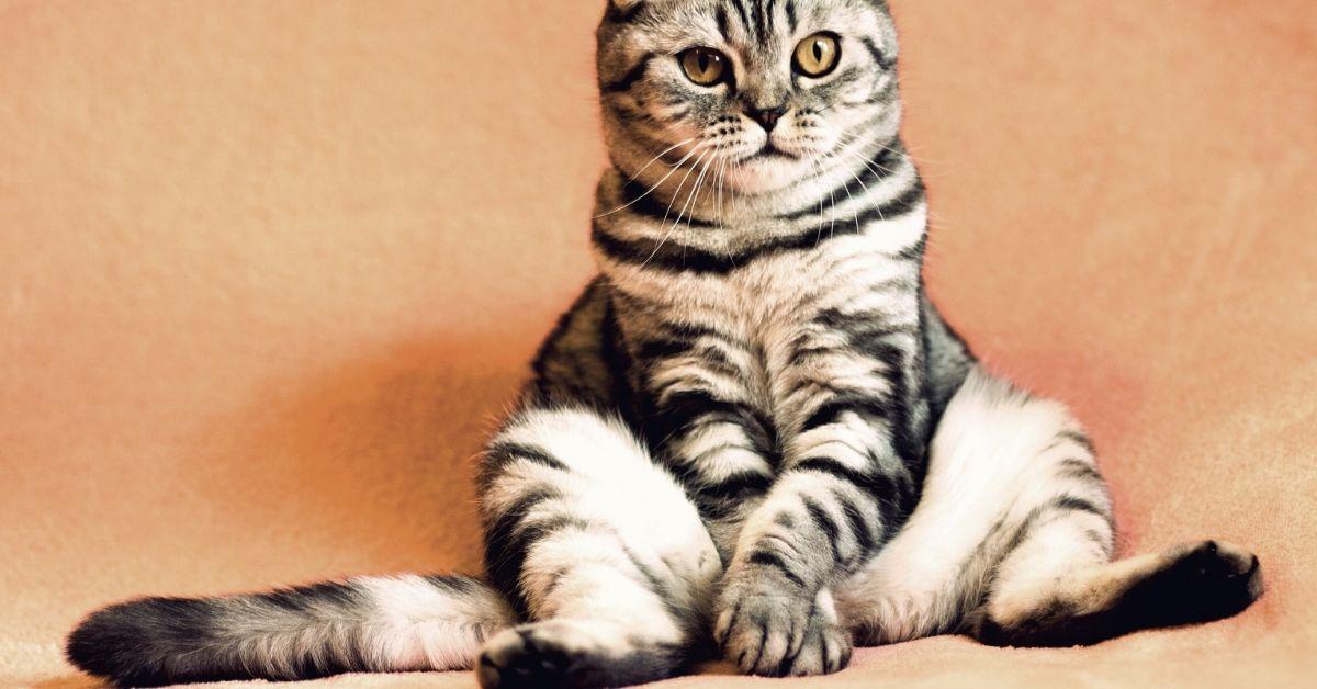 training cat to sit