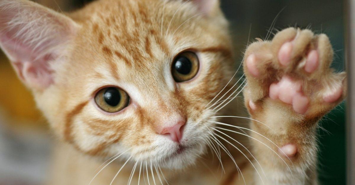 teach cat wave hello