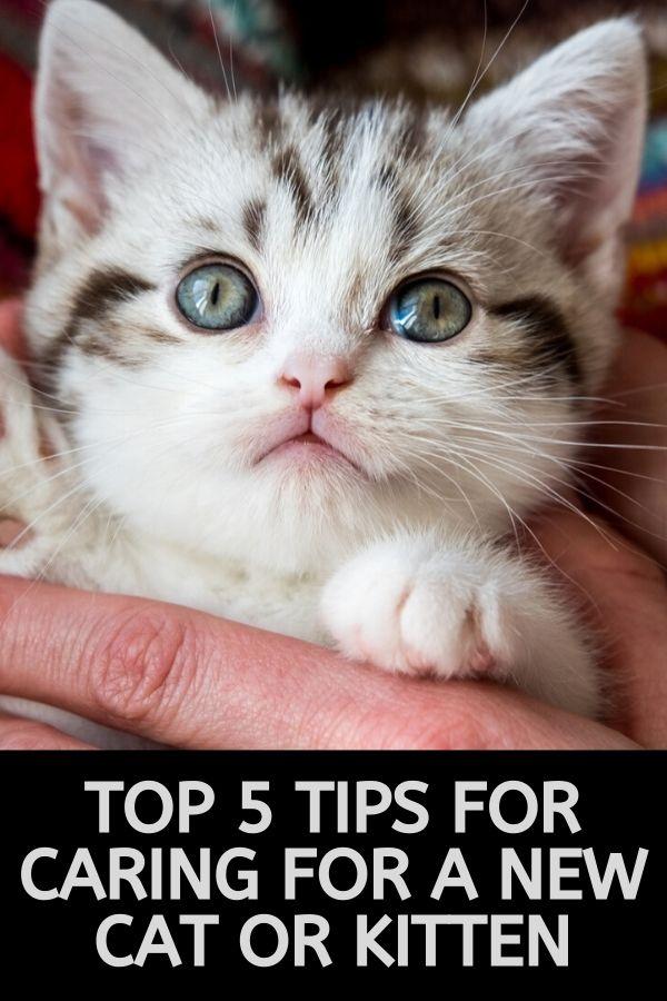 new kitten care tips
