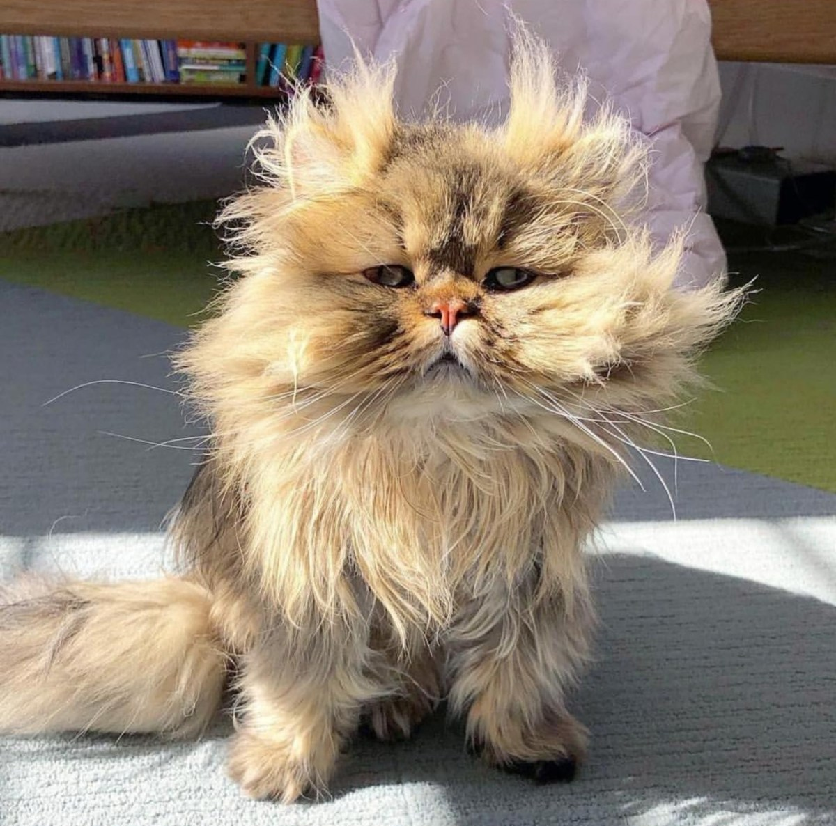 Cats Having A Bad Hair Day: Advanced Bed Head