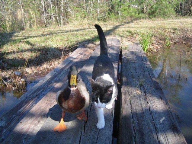 Meanwhile, at the Duck Pond\u2026 \u2013 CUTETROPOLIS