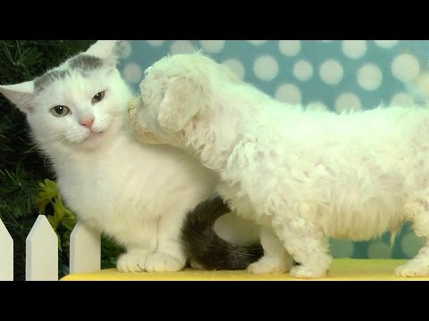Puppy Tries To Kiss Cat