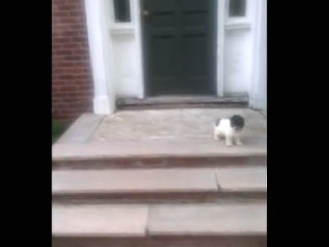 Puppy Afraid Of Stairs Finds Better Way
