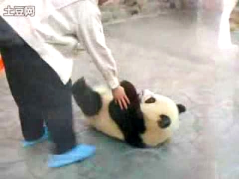 Baby Pandas Trying To Escape