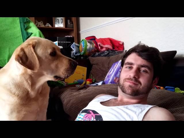 Ignoring A Labrador video