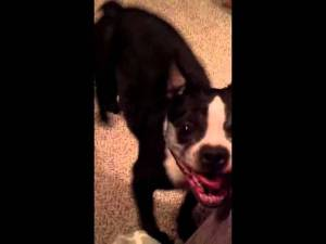 This Dog Has Rhythm funny dog video