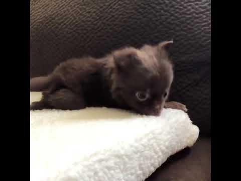Adorable Puppy Can't Contain His Excitement