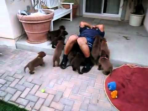 (VIDEO) Adorable Puppies Go Into Attack Mode
