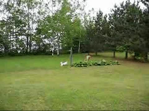 Deer And Dog Playing