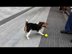 (VIDEO) Clever Dog Plays Fetch with Himself