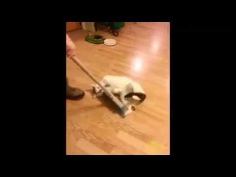 Man Sweeps Cat Off Floor